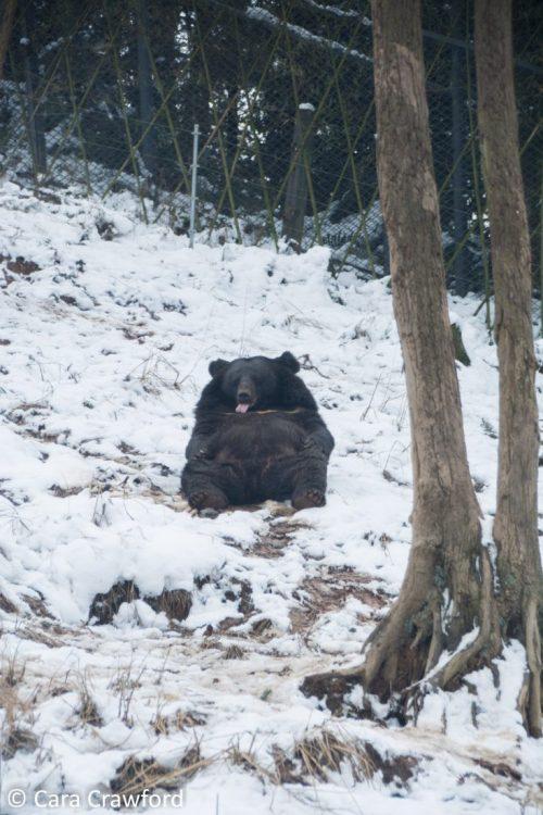 Bifengxia Zoo: Pandas Gone Wrong