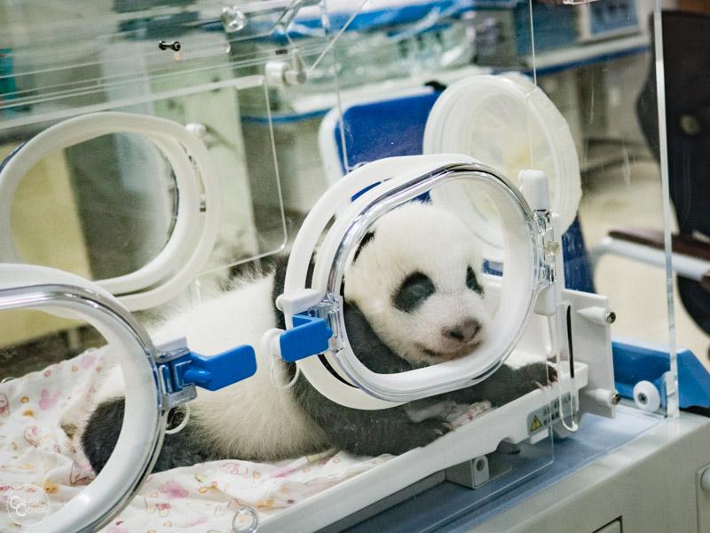 bifengxia-panda-base