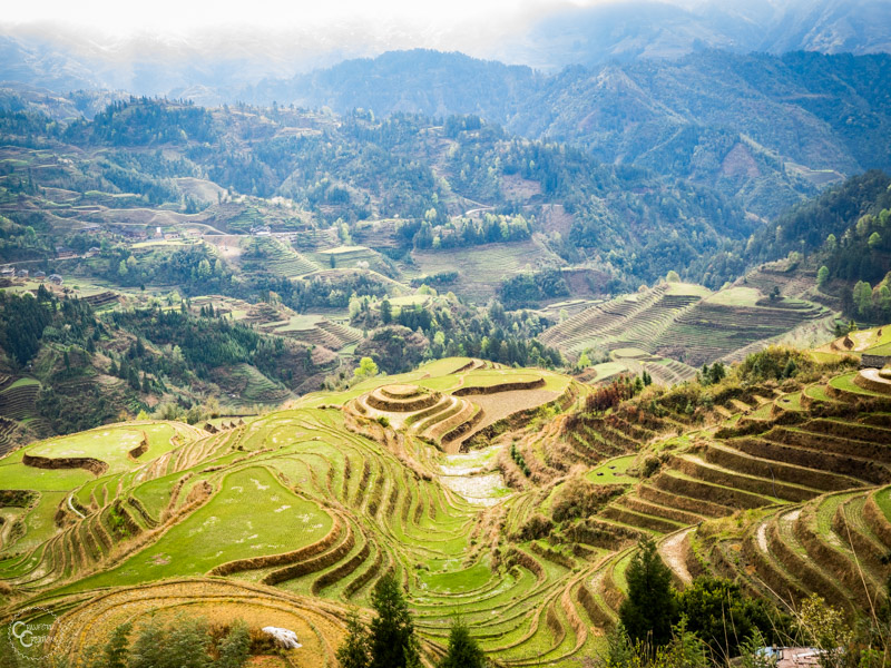 dazhai-rice-terraces