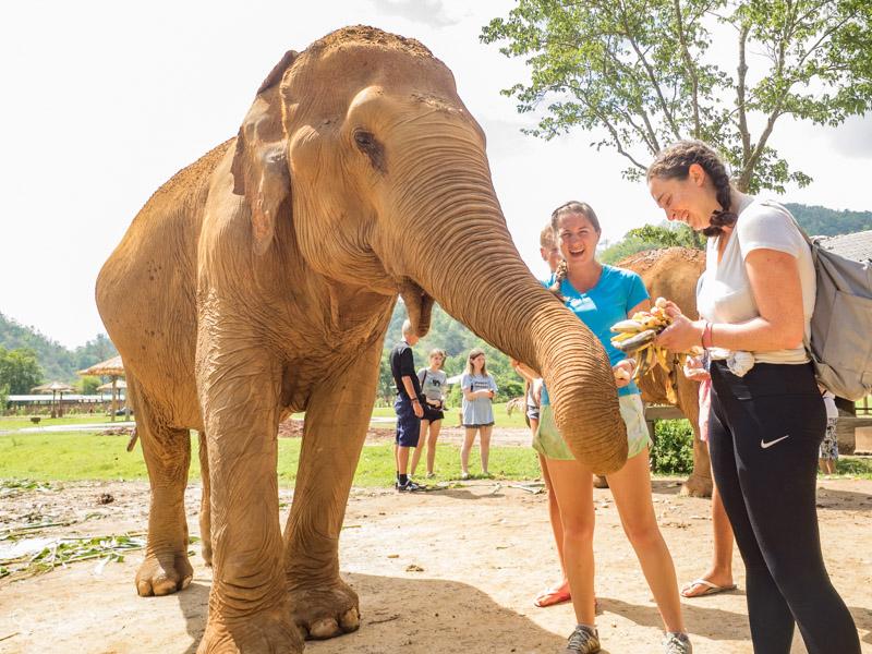 elephant-nature-park-weekly-volunteer