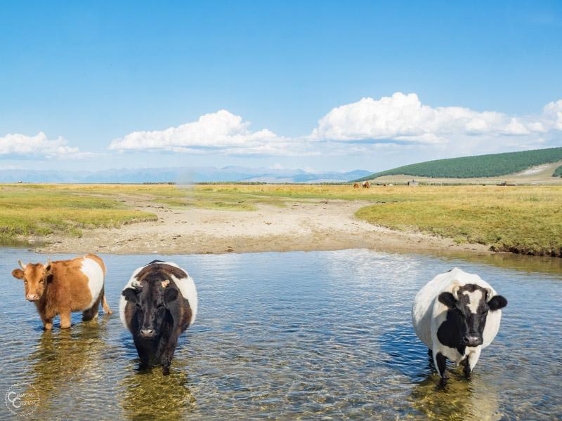 mongolia-taiga