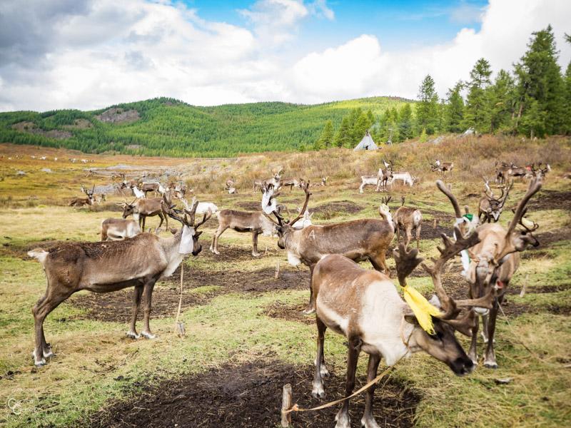 tsaatan-reindeer-herders-mongolia