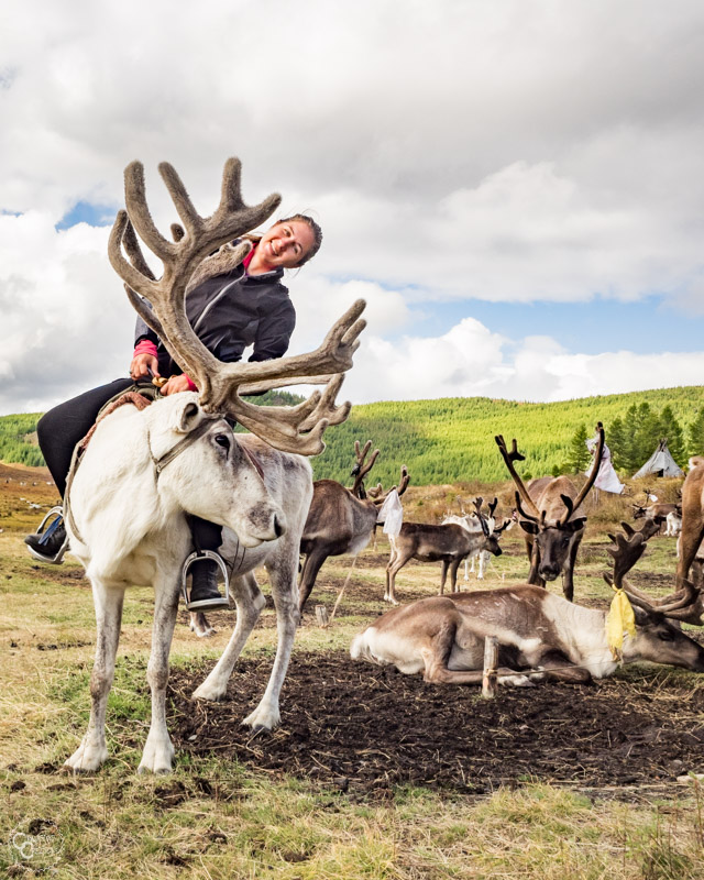 riding-reindeer-mongolia