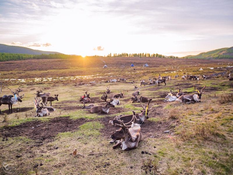 tsaatan-reinder-herders-mongolia