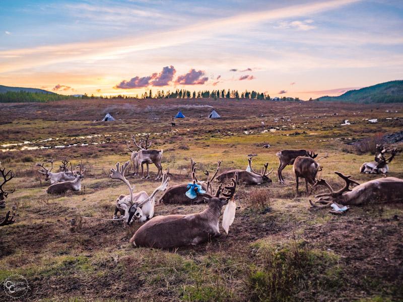 tsaatan-reindeer-herders