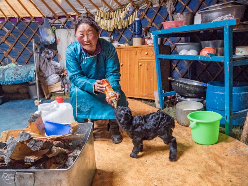 nomad-family-mongolia