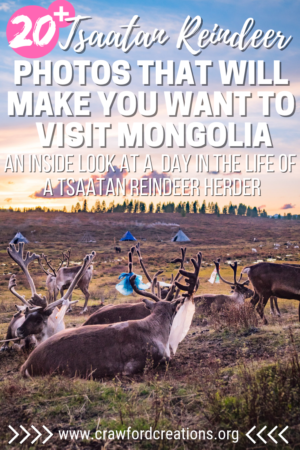 Tsaatan Reindeer Mongolia | Tsaatan Reindeer Photos | Mongolia Reindeer | Mongolia Photo Essay | Mongolia Travel | Asia Travel | Travel Photography | Mongolia Photos