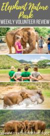 Elephant Nature Park | Elephant Sanctuary Thailand | Elephant Nature Park Chiang Mai | Elephant Sanctuary Chiang Mai | Elephant Tourism Thailand | Elephant Nature Park Weekly Volunteer Review | Elephant Nature Park Review | Elephant Nature Park Weekly Volunteer | Volunteer With Elephants Thailand | Thailand Travel | Chiang Mai Travel | Southeast Asia Travel